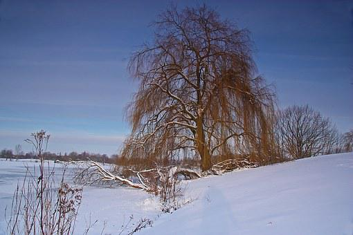 Weeping Willow, Winter, Lake, Ice, Snow, Cold