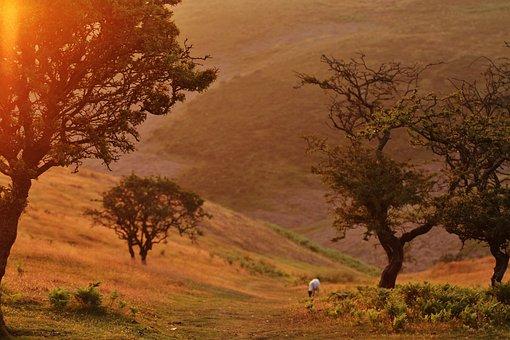 Animal, Field, Grass, Hills, Landscape, Nature, Sunrise