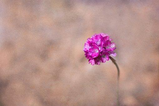 Flower, Pink, Pink Flower, Pink Flowers, Cushion Flower
