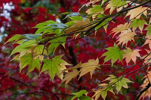 Rain, Leaves, Colorful, Color, Green, Yellow, Red
