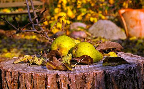 Pears, Harvest, Fruit, Autumn, Fruits, Ripe