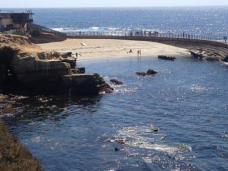 Seaside, Seashore, Seals, Young Harbor Seal, Shore