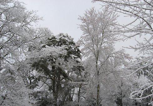 Winter, Trees, Snow, Ice, Texas, Season, Landscape