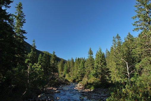 Tatry, Polish Tatras, The High Tatras, Spruce, Tree