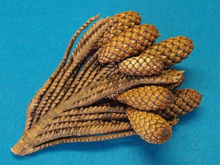 Thika Nut-twig, Raphia Farinifera, Raffia Palm, Tap