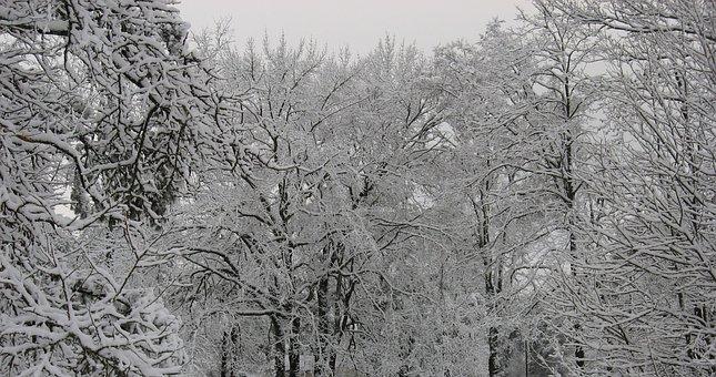 Winter, Trees, Snow, Ice, Season, Landscape, White