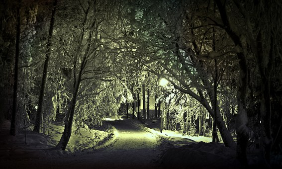 Winter, Snow, Wintry, Trees, Shadow, Cold, Landscape