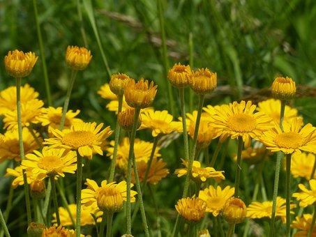 Flowers, Yellow, Wild Flowers, Wild Plant