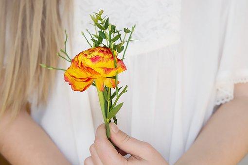 Flower, Ranunculus, Blossom, Bloom, Yellow Red