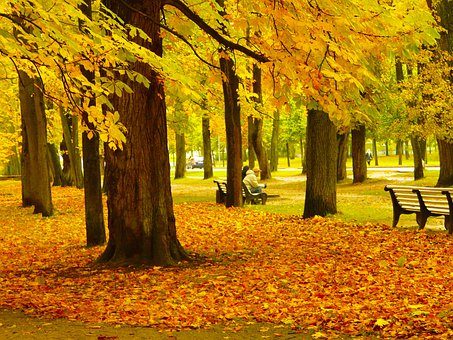 Amazing, Fall, Colorful, Colors, Beautiful, Cold