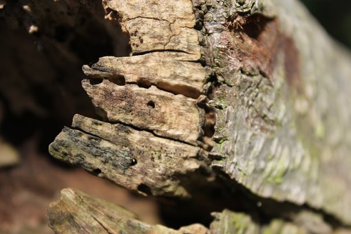 Wood, Log, Strains, Hollow, Tree Trunks, Morsch