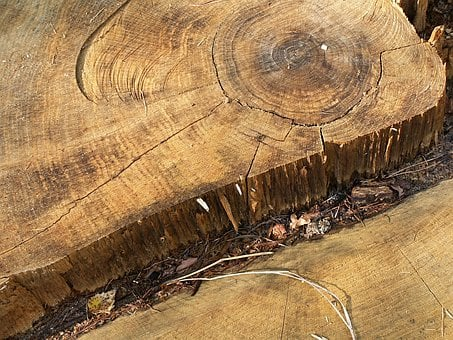 Stump, Rings, Defeated, Wood, Oak