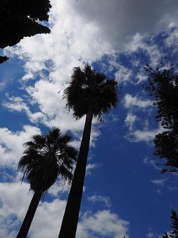 Palm Trees, Strains, Long, High, Palm Trunks, Trees