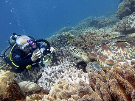 Underwater, Scuba Diving, Fauna, Diver, Turtle