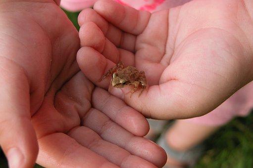 Hands, żabka, Child Care, Frog, The Frog