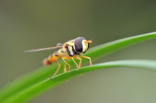 Macro, Insect, Fly, Nature, Animal, Summer, Pattern