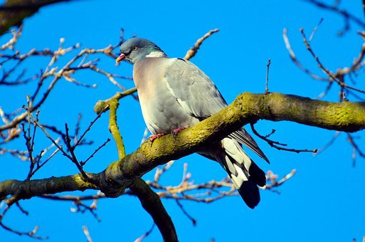 Alive, Alone, Animal, Avian, Beak, Beautiful, Bird