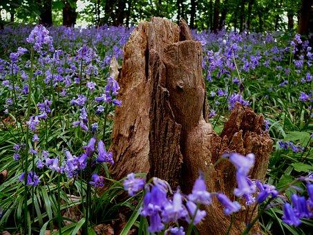 Flower, Blue, Bluebell, Flora, Fauna, Nature, Spring