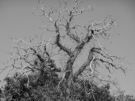 Tree, Branches, Craggy, Spooky, Dead, Crooked, Bare