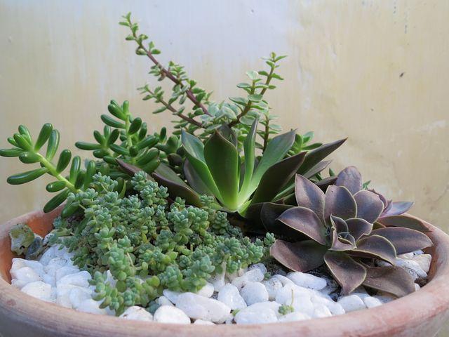 Pot, Flower, Bone, Dragon, Rock