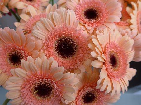 Gerbera, Flower, Florist, Blossom, Bloom, Filled