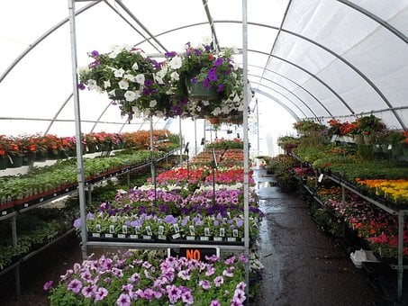 Flowers, Greenhouse, Colorful, Flora, Florist, Nursery
