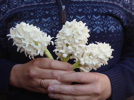 Hyacinths, For You, Flowers, Gift, Hand, Stick, Spring