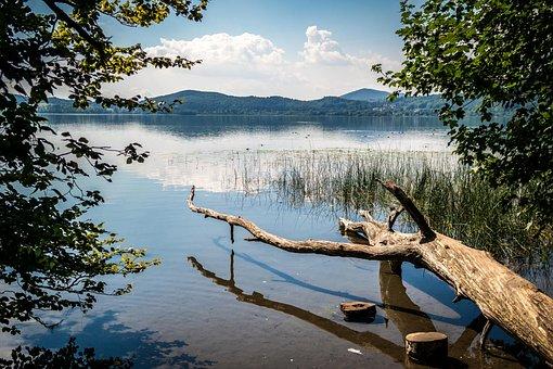 Lake, Wood, Laacher Lake, Maria Laach, Log, Water