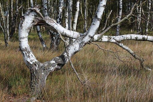 Alpha, Tree, Bent, Nature, Moor