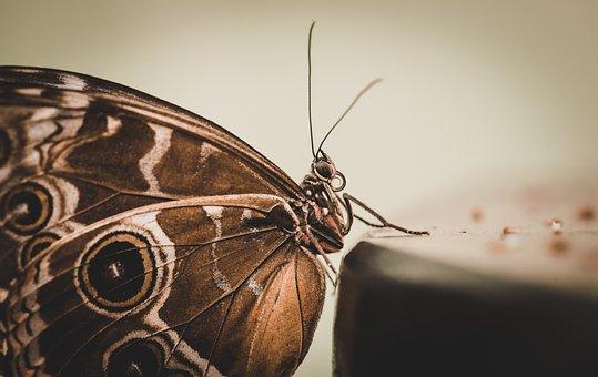 Butterfly, Monarch, Moth, Caterpillar, Spots, Pattern