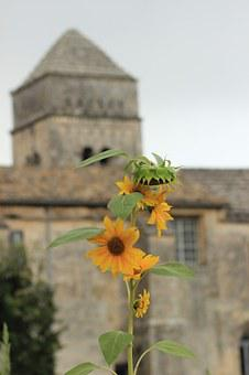 Sunflowers, St Remy, Provence, Abbey, Van Gogh