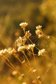 Flower, Wildflower, Blossom, Garden, Fresh, Wild, Bloom