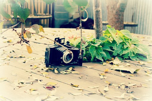 Camera, Leaves, Table, Old, Olden Day, Old Fashioned