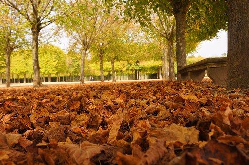 Leaves, Paris, Parisian, France, Palace Of Versailles