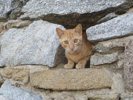 Cat, Kitten, Young Cat, Cat Baby, Red Cat, Animals, Pet
