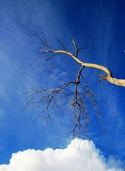 Tree, Dry, Twigs, Branches, Cloud, White, Bulky, Sky