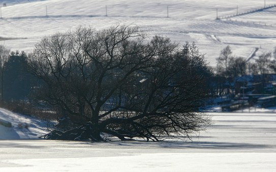Winter, Tree, Oak, Snow, Lake, Frozen, Kahl, Aesthetic