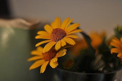 Flowers, Yellow, Sunflower, Yellow Flowers, White