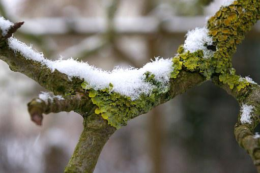 Moss, Branch, Nature, Tree, Bark, Forest, Branches