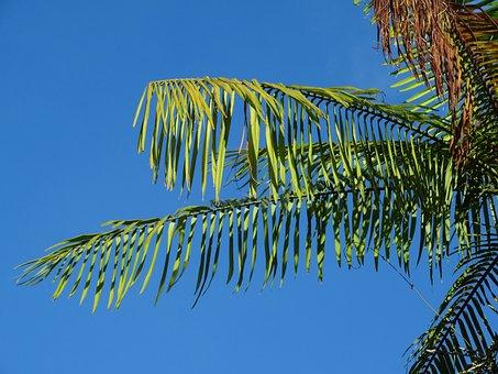 Cayenne, French Guiana, Nature