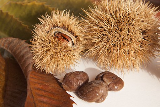 Sweet Chestnuts, Chestnuts, Nature, Autumn, Delicious