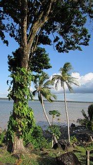 Cayenne River, Nature, Cayenne, French Guiana