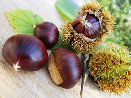 Chestnuts, Nut, Food, Natural, Seed, Shell, Snack