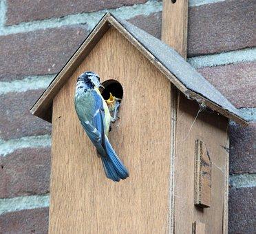 Bird, Pimpelmeesje, Birdhouse, Feeding, Little Birds