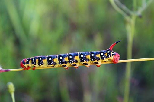 Caterpillar, Blade Of Grass, Insect, Bright, Poisonous