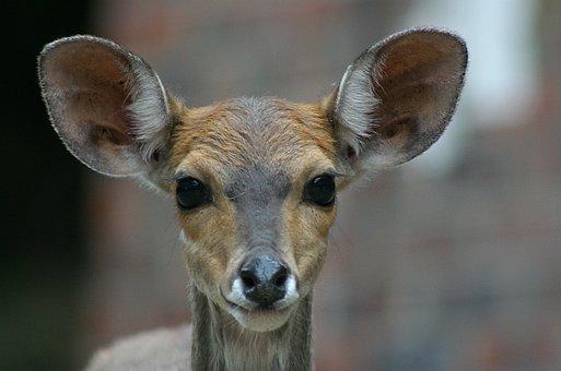 Buck, Deer, Juvenile, Wildlife, Animal, Mammal