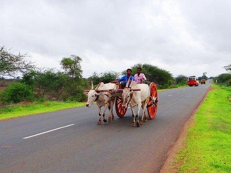 Bullock Cart, Karnataka, India, Gadag, Hubli, Highway
