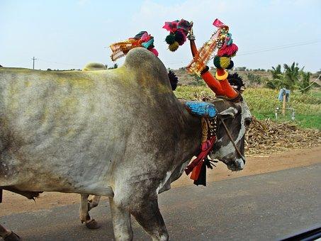 Aihole, Road, Karnataka, Bullock Cart, Rural, India