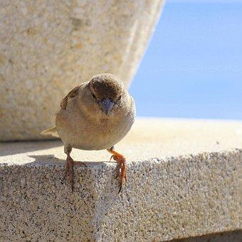 Bird, Sparrow, Ave, Little Bird, Animal, Peak, Stopped
