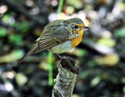 Bird, Birdie, Road, Animal World, Cute, Sweet